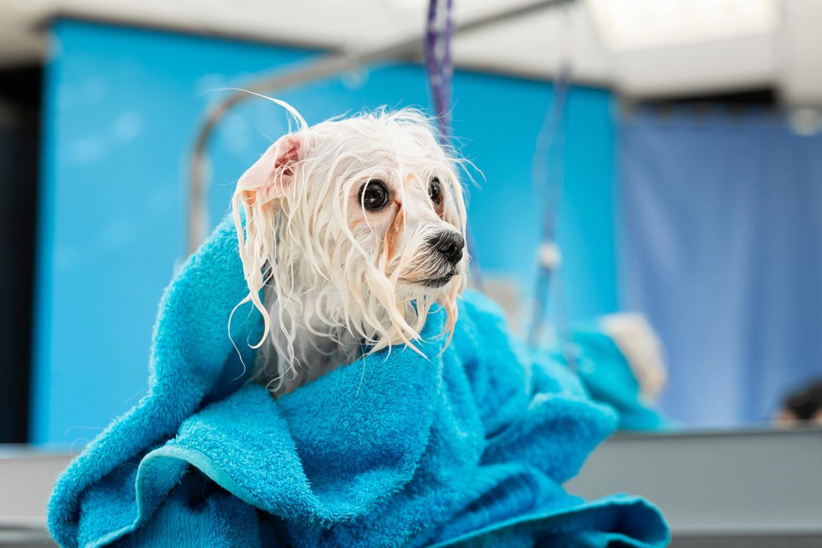 Le malattie della pelle si presentano più facilmente sui cani poco lavati.