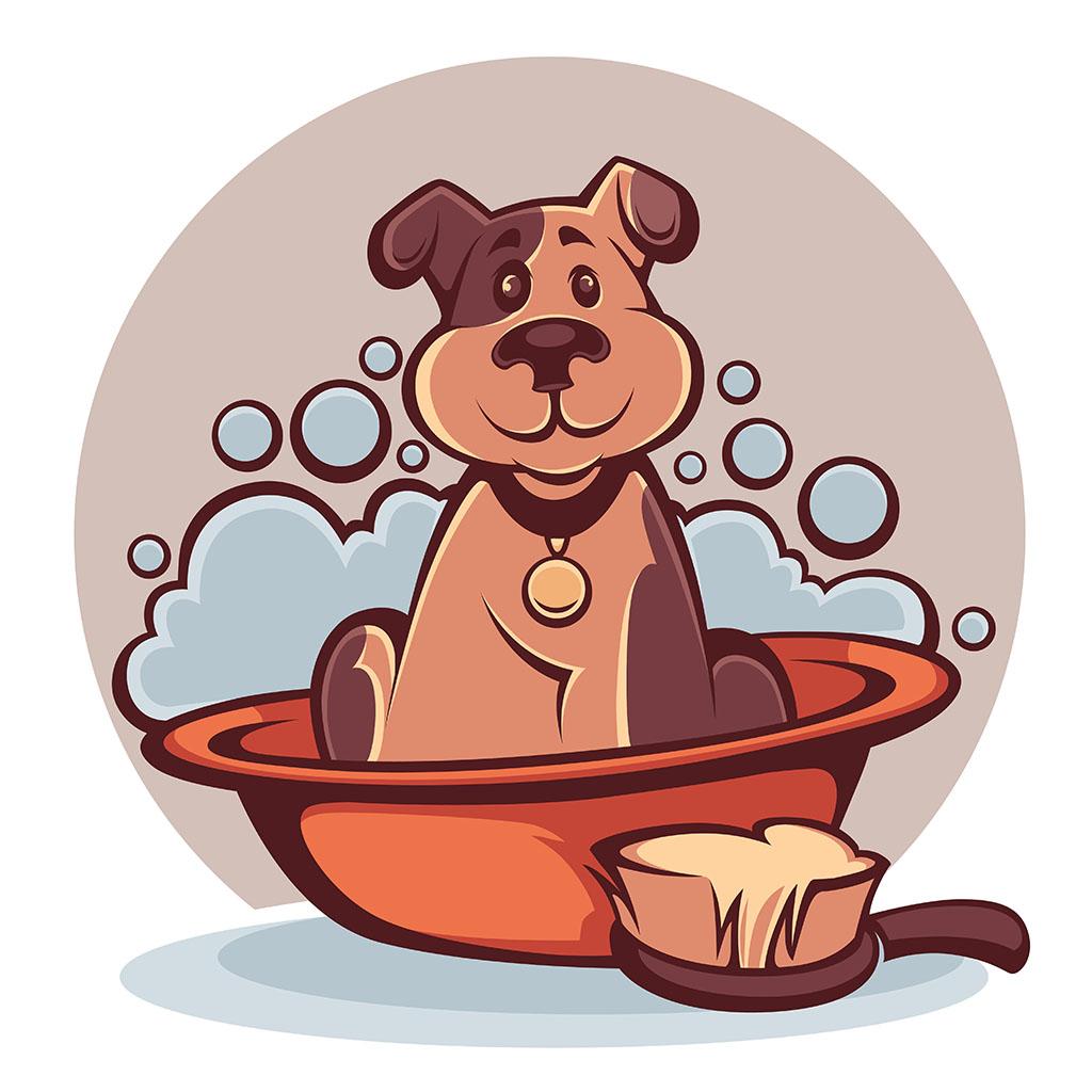 corso toelettatura cani